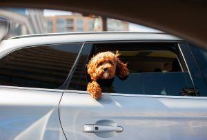 Dog Puppy Pet Cute Doggy Animal  - EddieKphoto / Pixabay