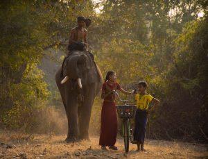 Elephant Girl Boy Bicycle Ride  - AKQBurma / Pixabay