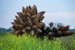 Field Plants Men Farm Farmers  - xuanduongvan87 / Pixabay