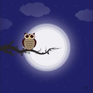 Owl Night Bird Perched Tree Branch  - MaiNgocBich / Pixabay